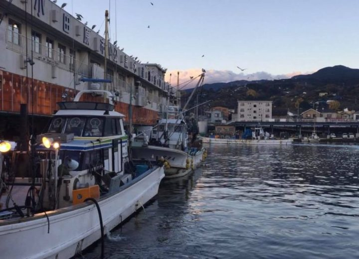 Experience a Japanese Fish Market from Hakone